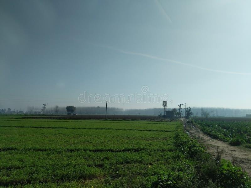 Campos verdes de Punjab fotos de archivo