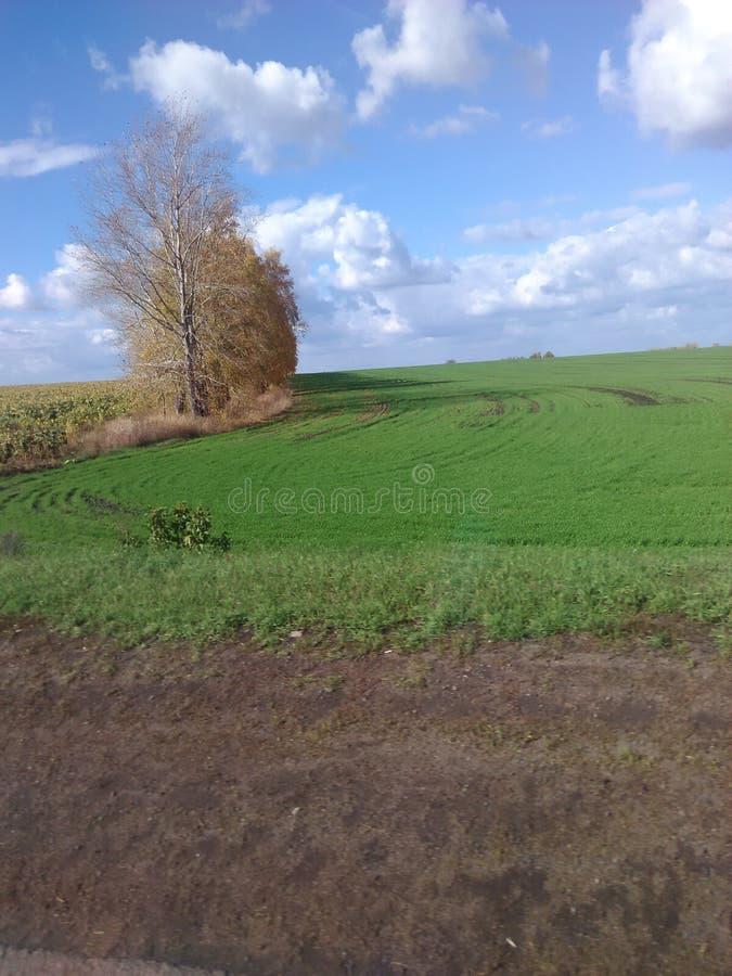 Campos verdes de Rusia foto de archivo