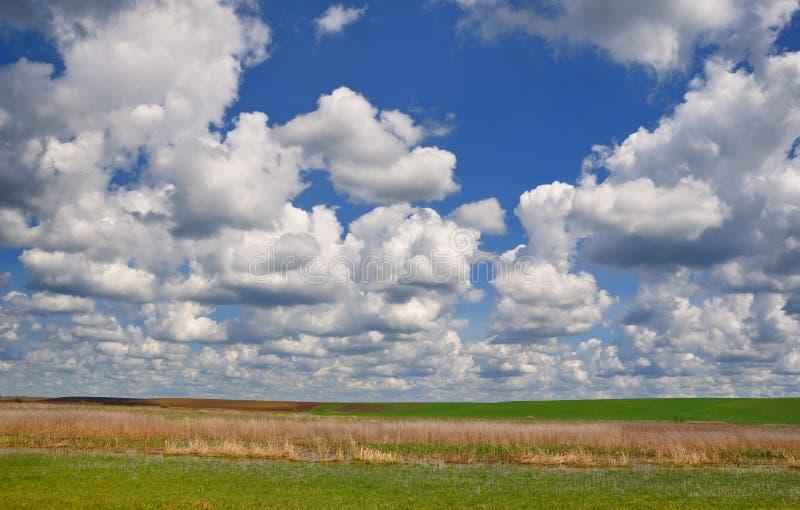 Campos verdes del cielo azul y de la primavera imágenes de archivo libres de regalías