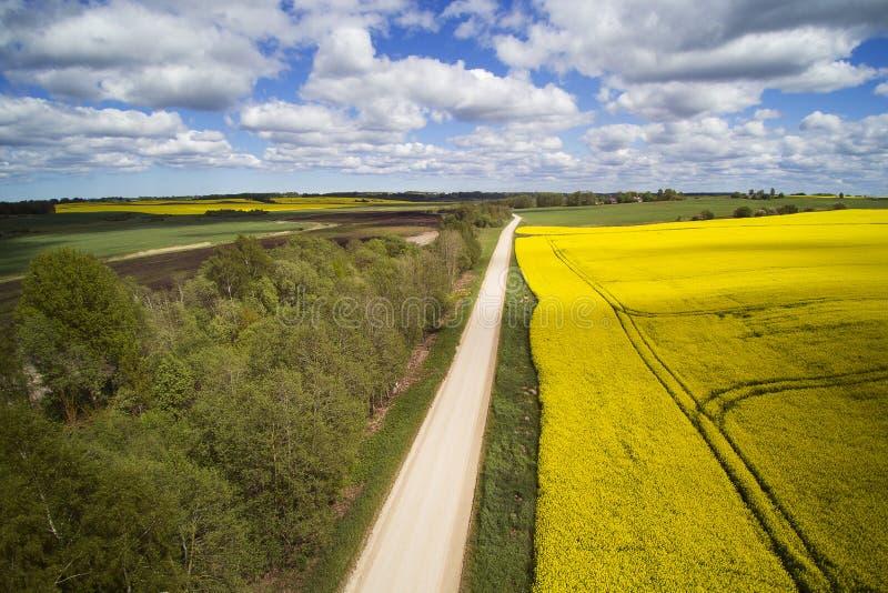 Campos verdes e amarelos na primavera letão fotografia de stock royalty free