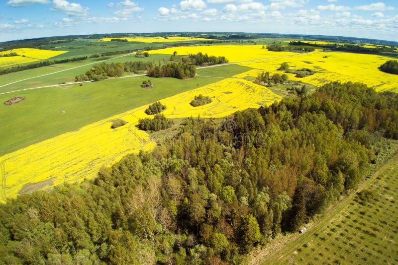 Campos verdes e amarelos na primavera letão imagens de stock royalty free
