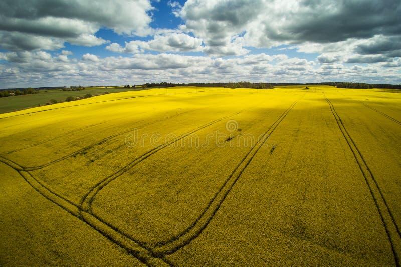 Campos verdes e amarelos na primavera letão imagens de stock
