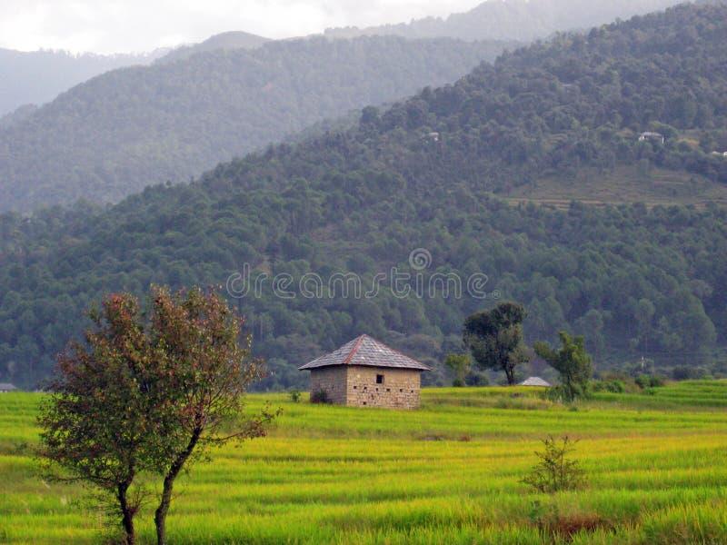 Campos verdes e etapa do arroz que cultivam India imagens de stock royalty free