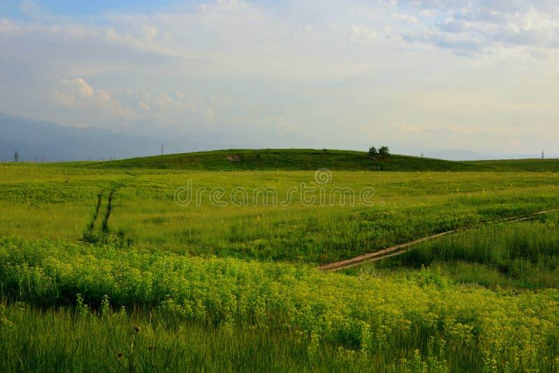 Campos verdes em Cazaquistão do sul foto de stock