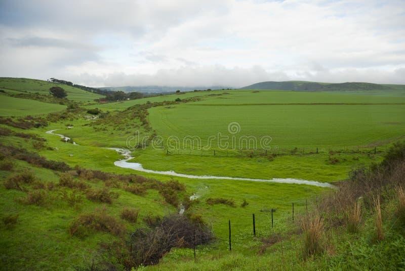 Campos verdes em um dia nebuloso foto de stock