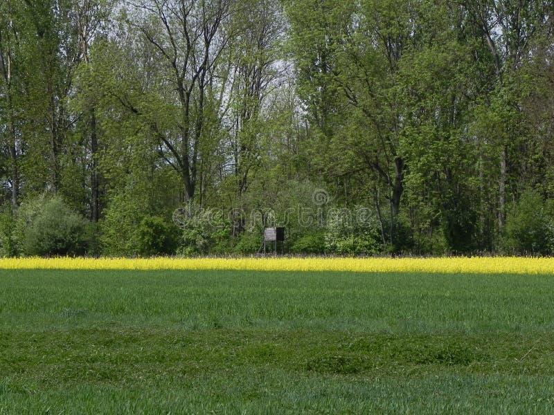 Campos verdes y amarillos fotos de archivo libres de regalías