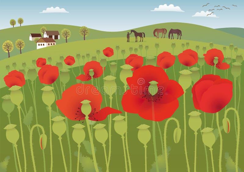 Campos vermelhos da papoila ilustração royalty free