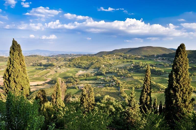 Campos, vinhedos e madeiras de Tuscan imagem de stock royalty free