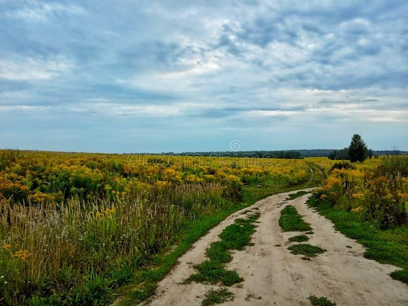Campos y cielo del verano foto de archivo