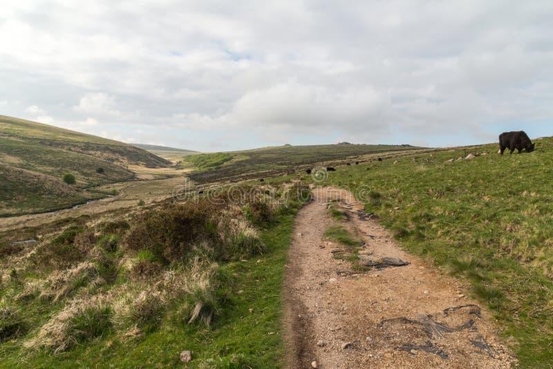 Campos y prados de Dartmoor fotos de archivo libres de regalías