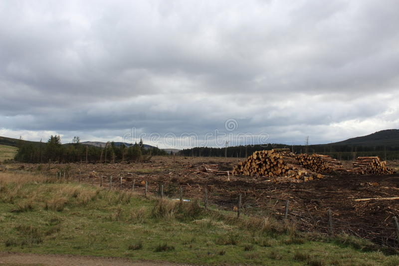Campsie-Hügel-Forstarbeit stockfotografie