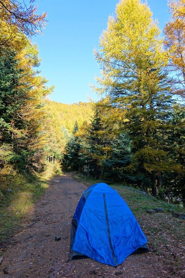 campsite стоковое изображение rf