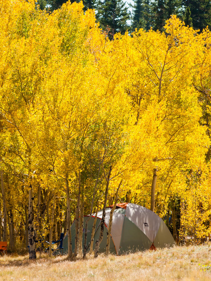 campsite stock foto's