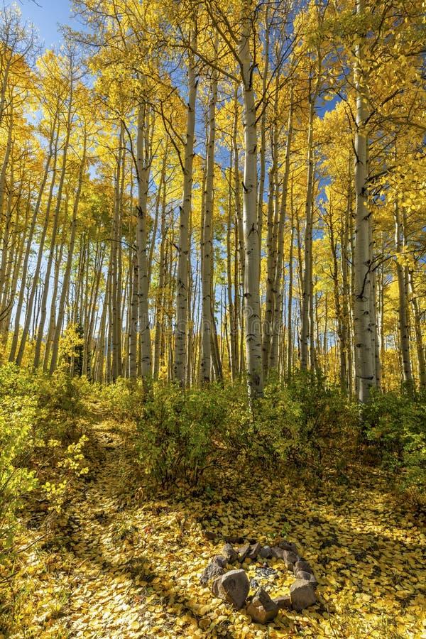 Campsite Aspen Grove nad McClure Pass fotografia royalty free