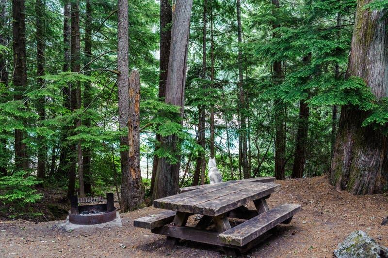 Campsite północ Spada kaskadą parka narodowego zdjęcia royalty free