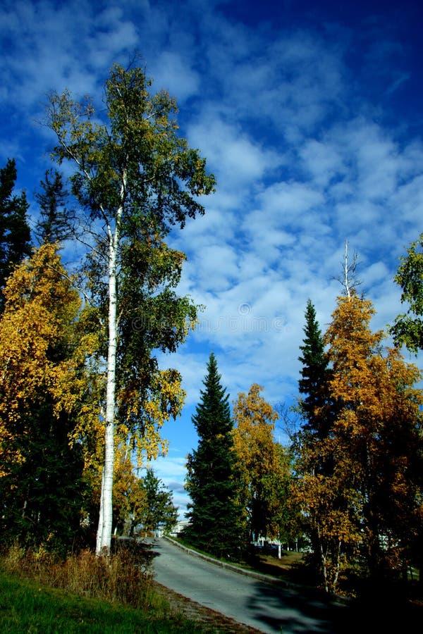 Campus d'UAF dans des couleurs d'automne image stock