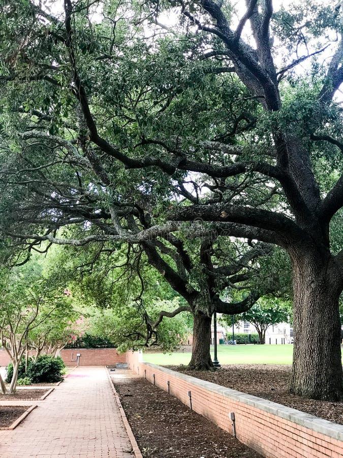 Campus de l'université de la Caroline du Sud photo libre de droits