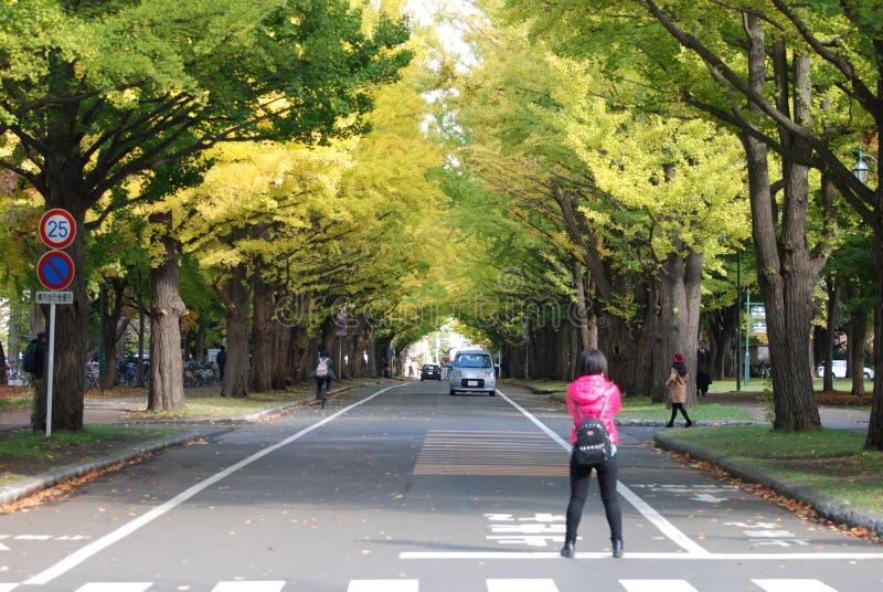 Campus de Sapporo de la universidad de Hokkaido fotografía de archivo libre de regalías