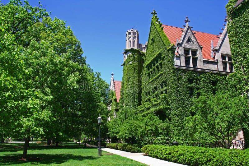 Campus de Universidad de Chicago fotos de archivo libres de regalías