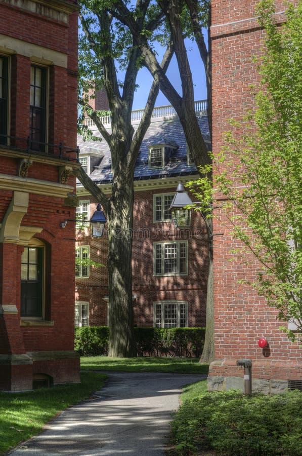 Campus de Universidad de Harvard, Cambridge, los E.E.U.U. imagen de archivo libre de regalías
