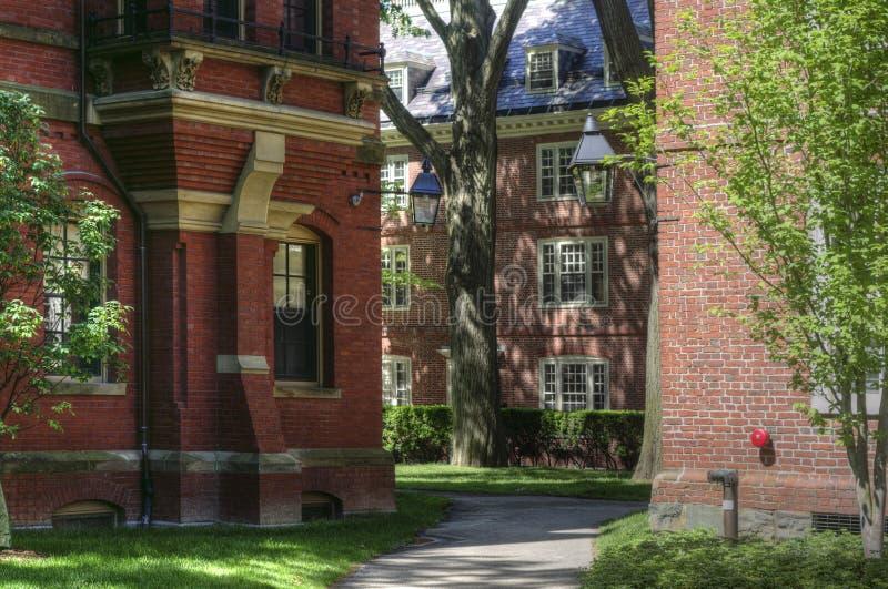 Campus de Universidad de Harvard, Cambridge, los E.E.U.U. fotos de archivo