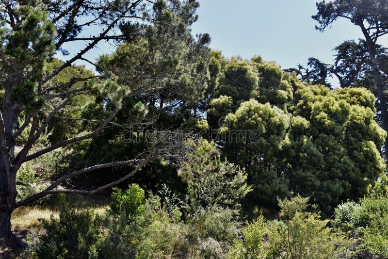 Campus solitaire de montagne d'université solitaire de montagne, 8 photographie stock libre de droits