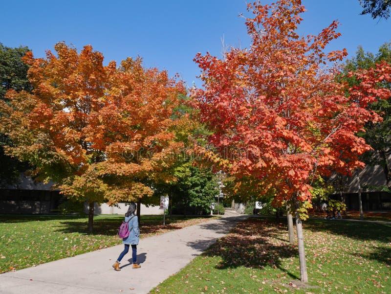 Campus universitario con i colori di caduta immagini stock libere da diritti