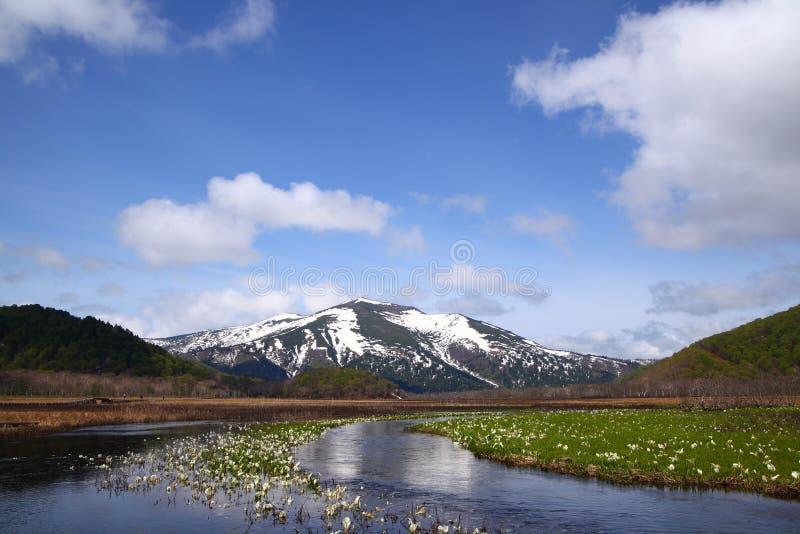 Camtschatcense de Lysichiton et Mt.Shibutu photographie stock
