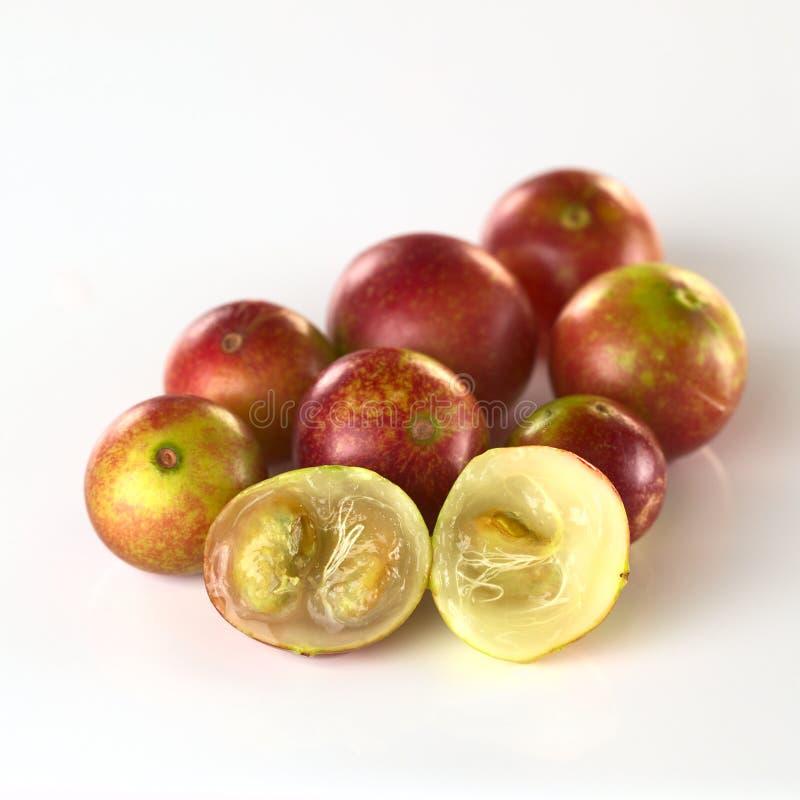 Camu Camu莓果 库存图片