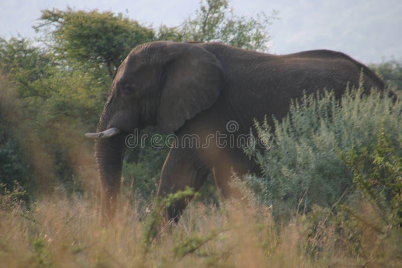 Camuflaje del elefante imagen de archivo