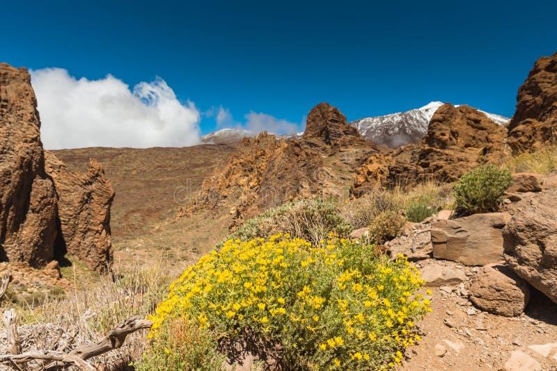Canário de Tenerife do vulcão de Teide da paisagem da lava fotos de stock royalty free
