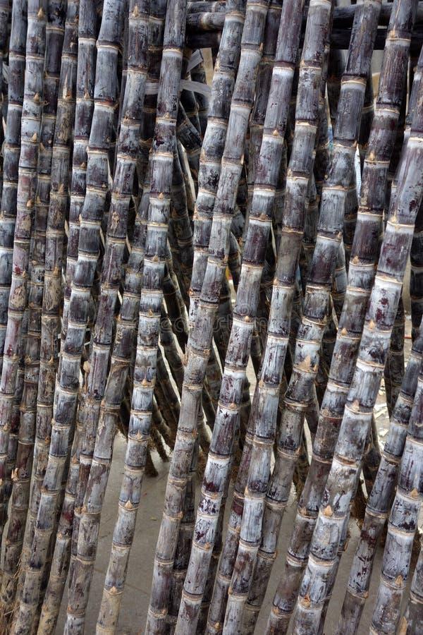 Cana-de-açúcar fotografia de stock royalty free