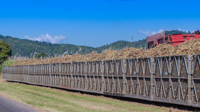 Cana-de-açúcar da carga do trator no escaninho do trem imagens de stock