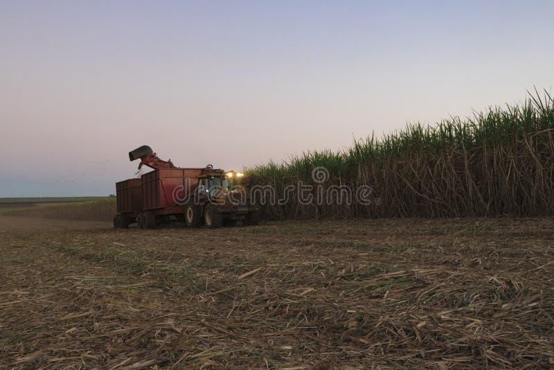 Cana-de-açúcar - trator e cana-de-açúcar da colheita mecanizada imagens de stock