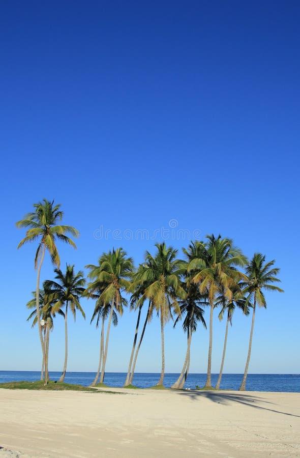 Cana de Punta image stock