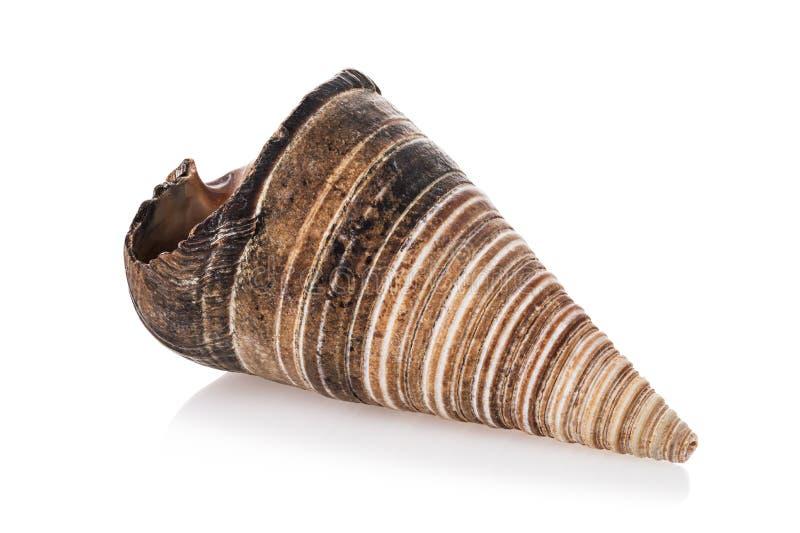 Cana marrom em forma de cone isolada sobre fundo branco imagens de stock royalty free