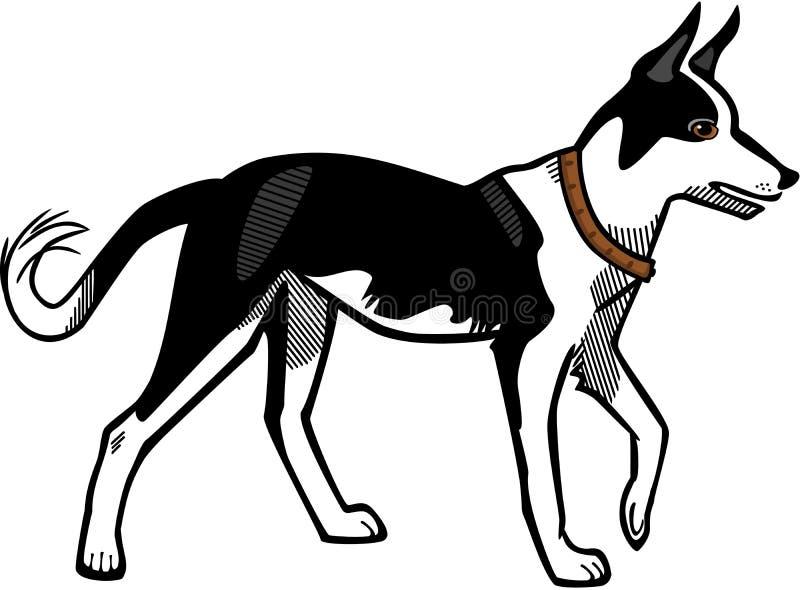 canaan σκυλί ελεύθερη απεικόνιση δικαιώματος