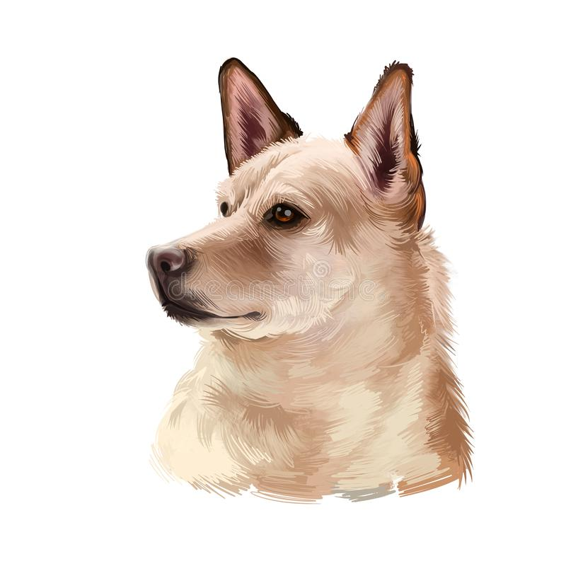 Canaan dog breed isolated on white background digital art illustration. Breed of pariah dog has been in existence in Middle East. Cute pet hand drawn portrait vector illustration
