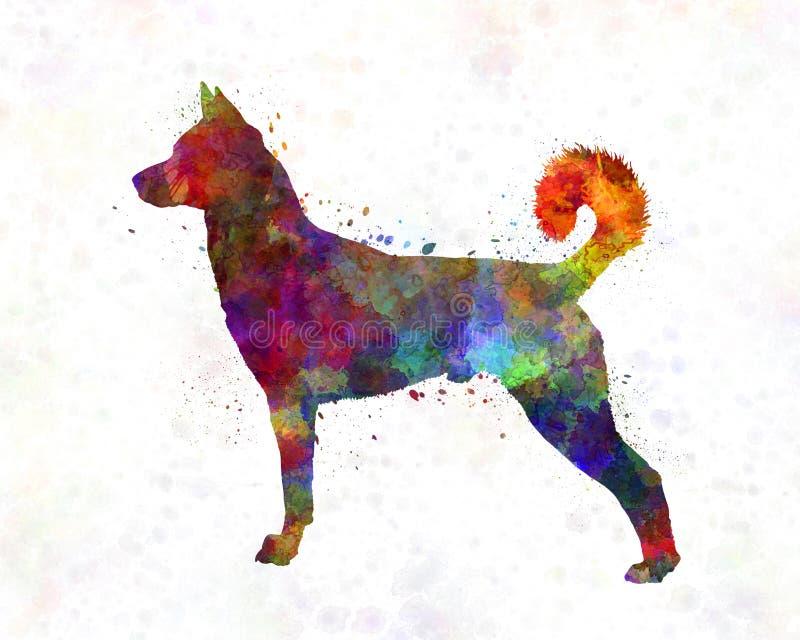 Canaan Dog in watercolor vector illustration