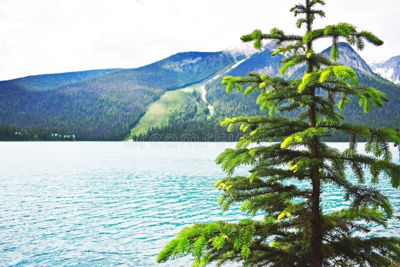 Canada_alberta_emerald arkivbilder
