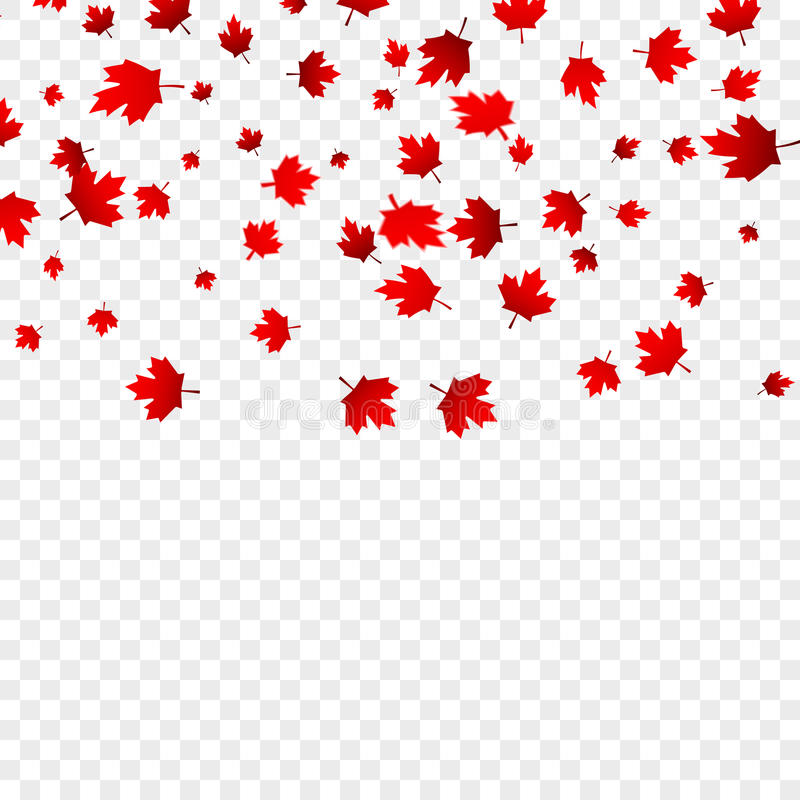 canada day maple leaves background  falling red leaves for canada day 1st july stock vector