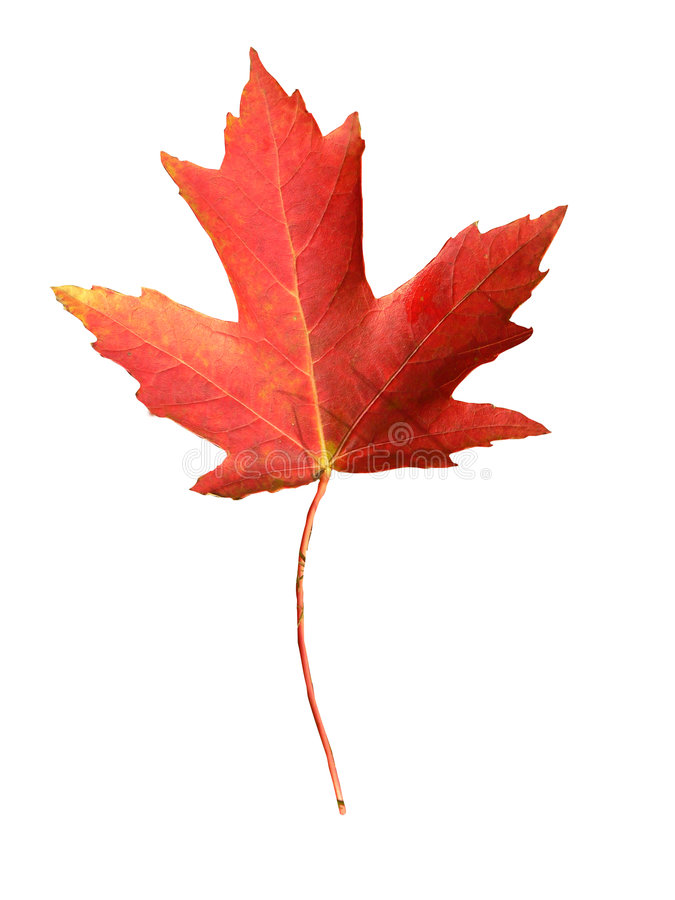 Download Canada flag symbol stock photo. Image of clipping, design - 671444