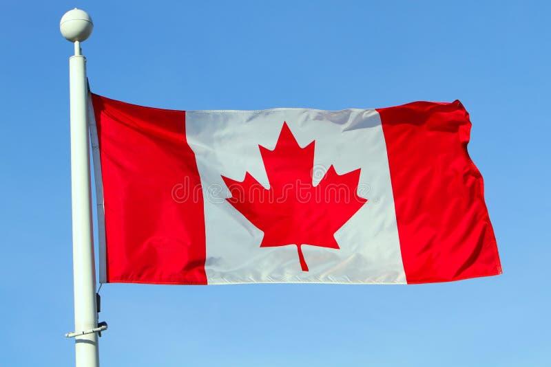 canada flaga obrazy royalty free