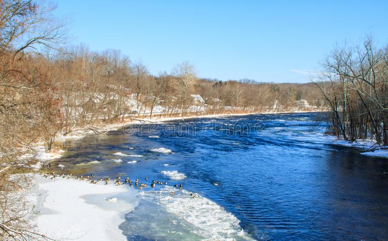 Canada geese on an icy river stock photo