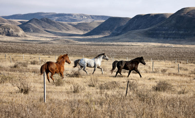 Canada Saskatchewan de bad-lands image libre de droits