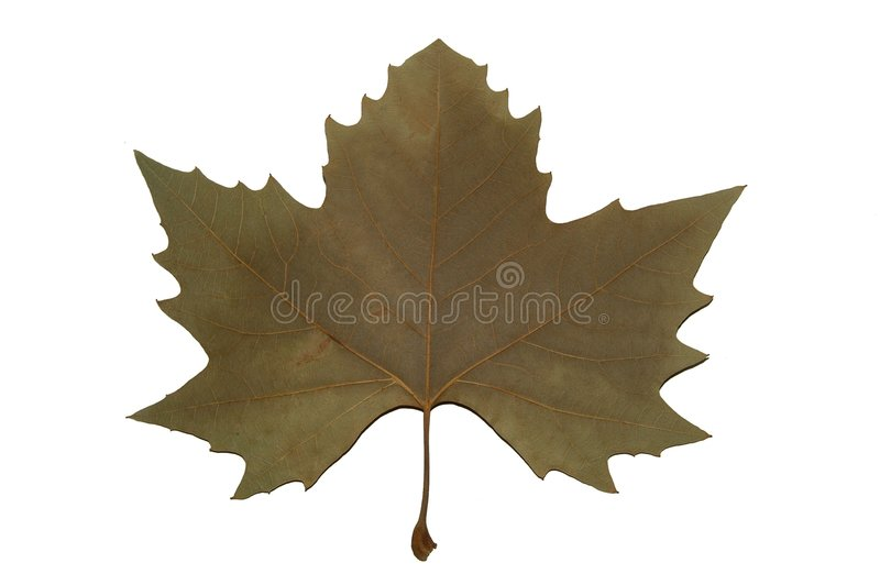 Download Canada symbol stock photo. Image of nature, leaf, wild, people - 10146