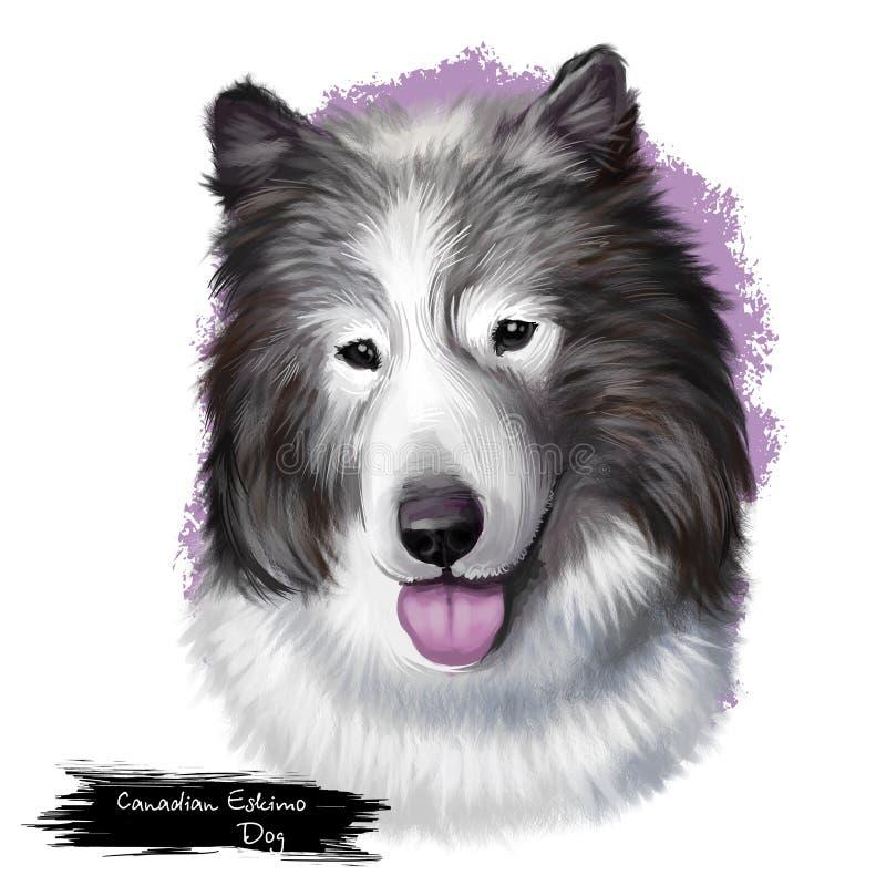 Canadees Eskimodiehondras op wit digitaal art. wordt geïsoleerd als achtergrond Noordpoolras van werkende hond, binnenlandse hond vector illustratie