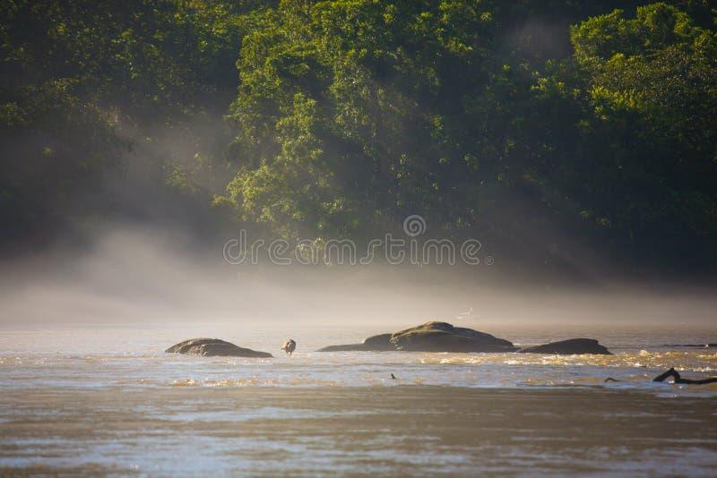 Canadensis Branta στον ποταμό Chattahoochee στο βάτραχο στοκ φωτογραφίες με δικαίωμα ελεύθερης χρήσης