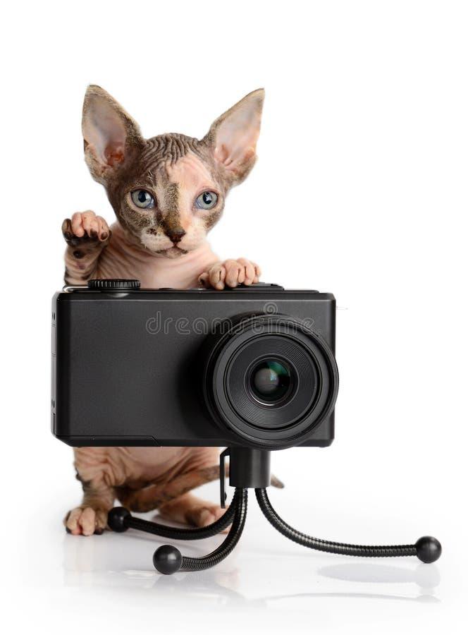 Canadese sphynx met camera royalty-vrije stock foto