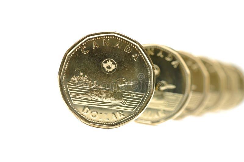 Canadese una moneta del dollaro fotografie stock